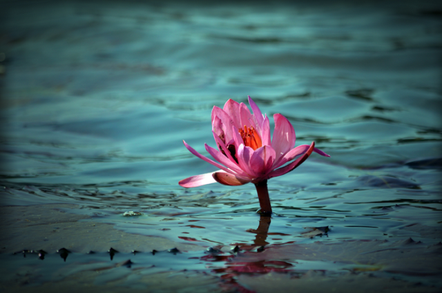 Mitchell Rabin Speaks on Conscious, Compassionate Capitalism, The Lotus Emerges from the Mud